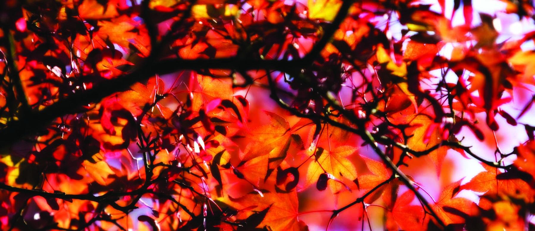 Fall_header.jpg